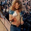 Robert Plant With A Dove